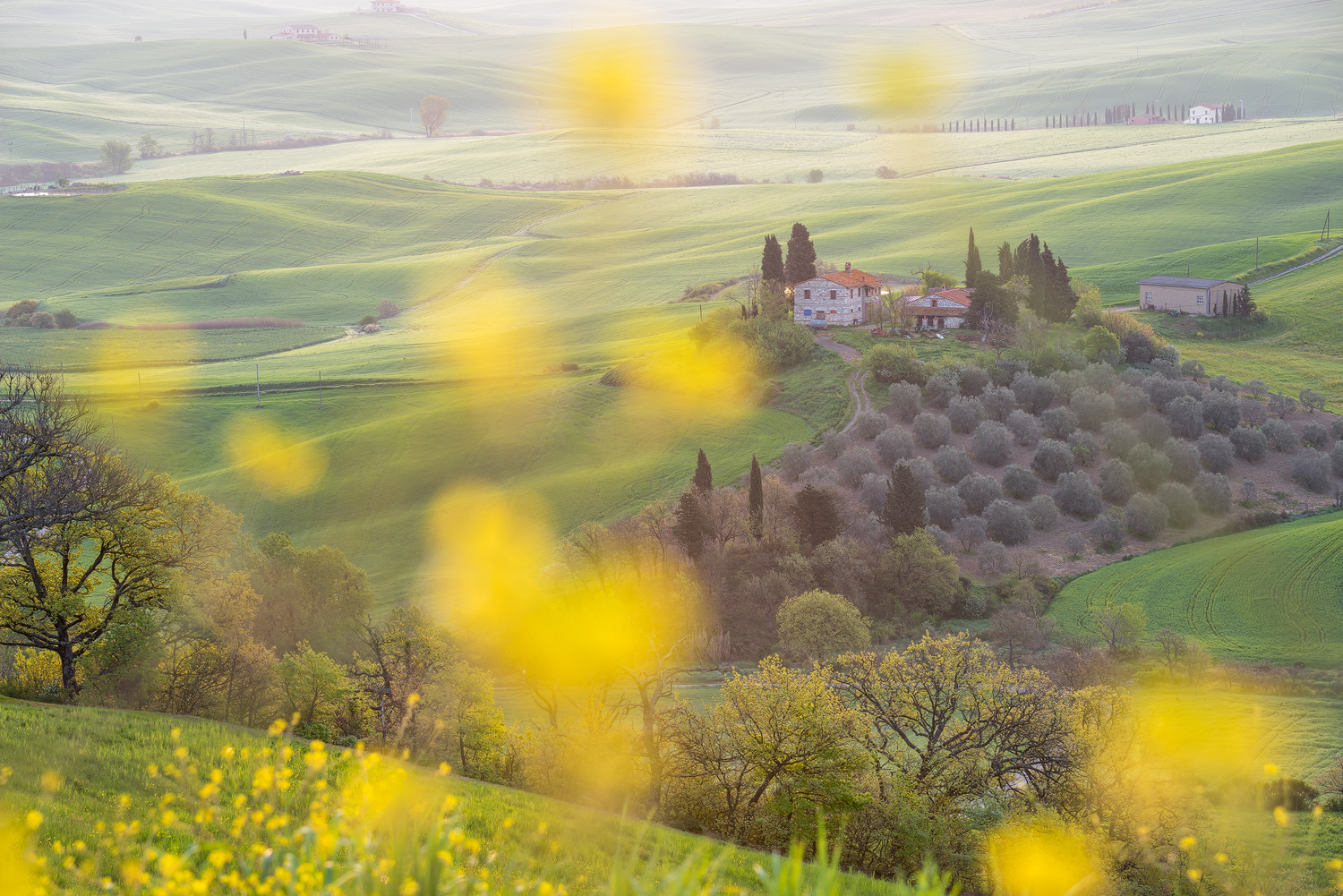orcia1_281016_1500px