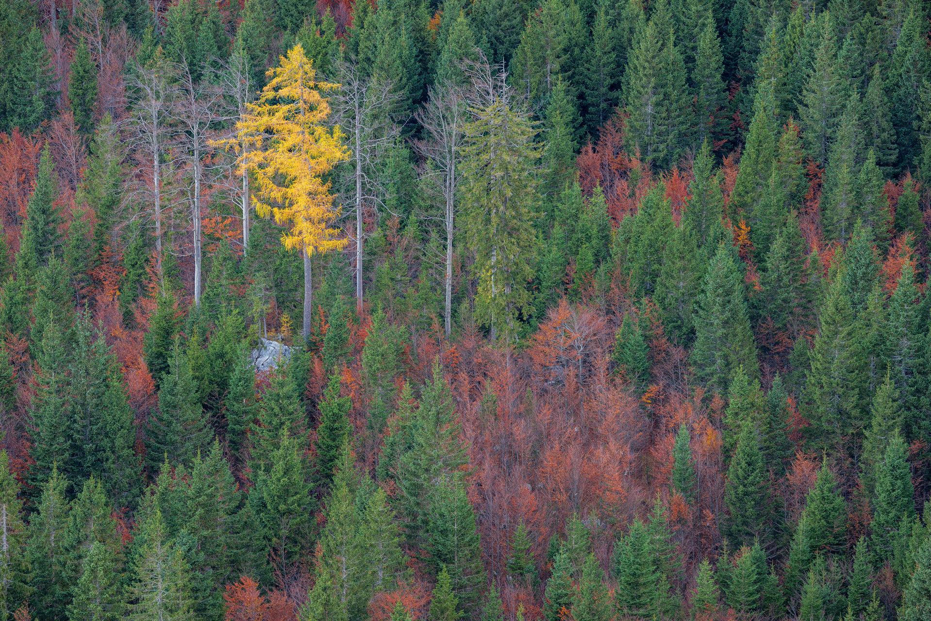 Parco nazionale del Triglav (Slovenia)